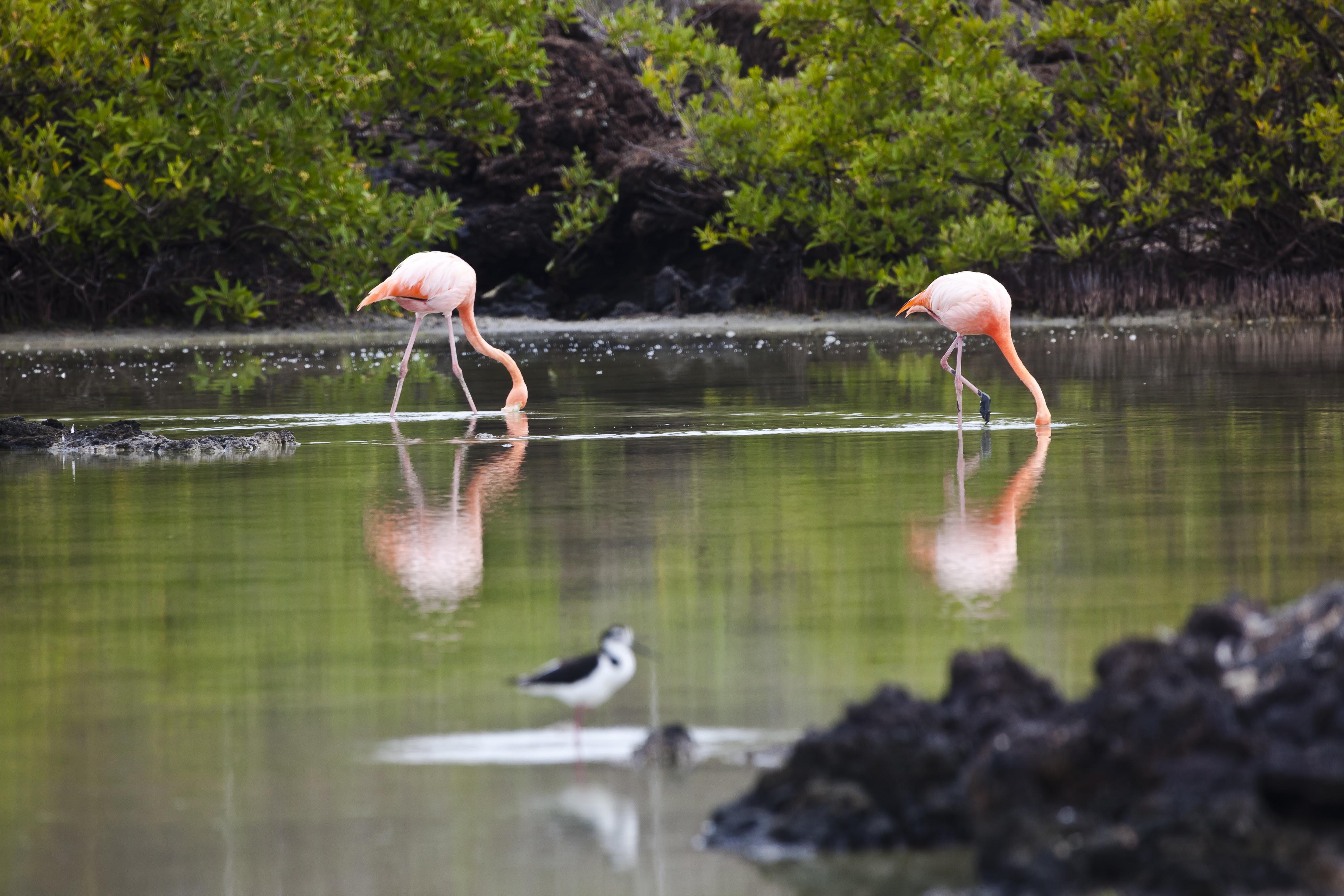 GPS. flamingos