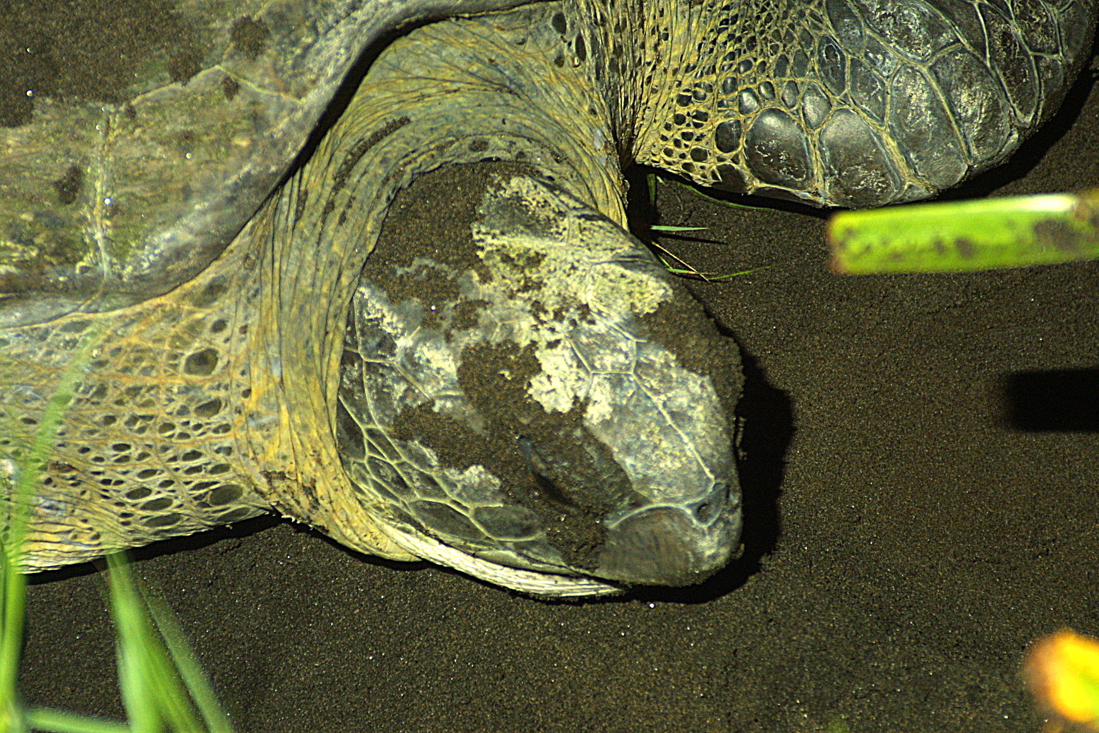 turtle head close up