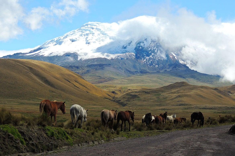 antisana volcano ecuador