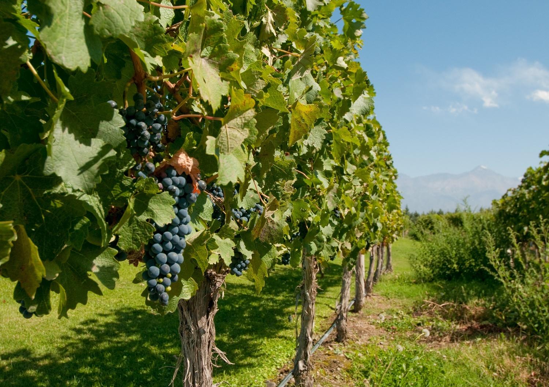 MDZ. wineries