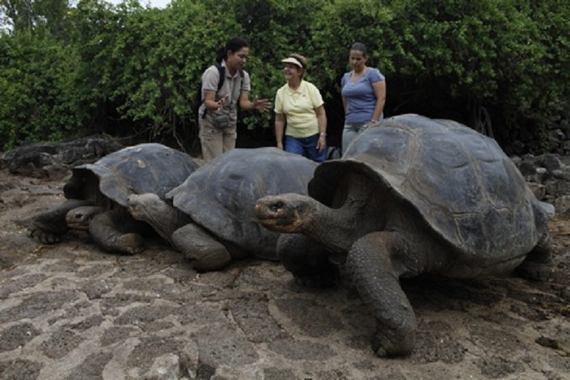 galapagos_ktpartners_large tortoise
