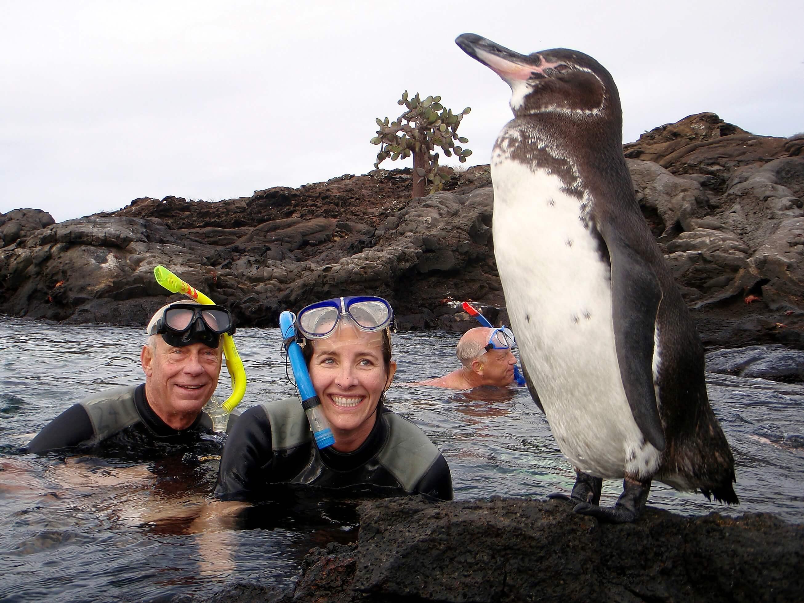galaven penguin