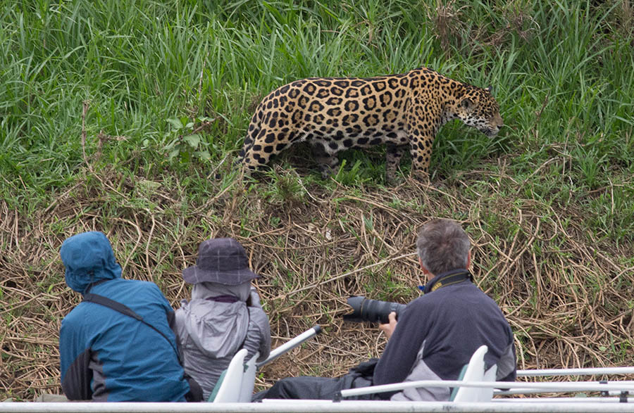 Jaguar-Extreme