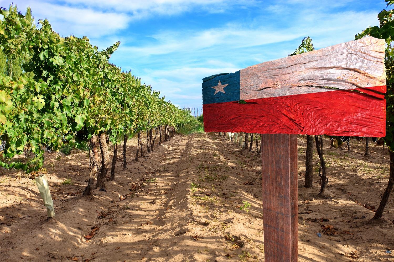 A Chilean Wine Primer