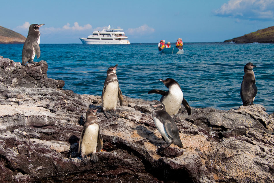 Best Yachts in the Galapagos