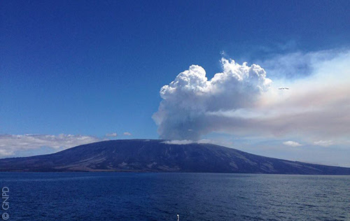 Twin volcanoes erupt simultaneously in the Galapagos